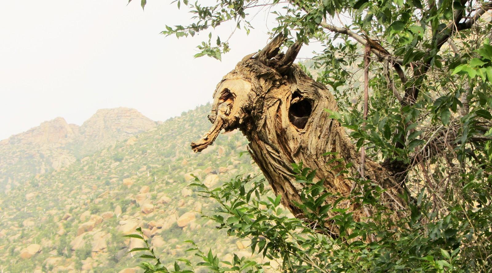 arbre en mongolie